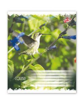 Тетрадь 12 л., косая линейка Brisk «Маленькие птицы»