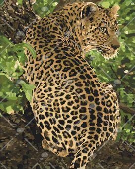 Набор для росписи по номерам «Леопард» 40 х 50 см