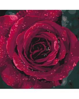 Набор для росписи по номерам «Роза» 40 х 40 см